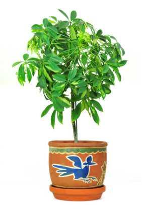 Grünpflanze im Topf